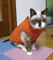 ちゃんちゃんこ 高齢猫 おばあちゃん猫